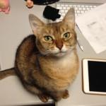 ネコとのコミュニケーションについて思うこと(付かず離れずよい加減)