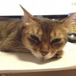 ネコのスキンシップについて思うこと(うっとおしいほど愛おしい)