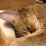 ネコのイタズラについて思うこと(やめられない とまらない)