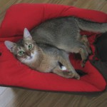 ネコの避妊について思うこと(みんなの幸せのために)