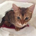 ネコの好奇心(袋)について思うこと(カンガルーではないけれど)