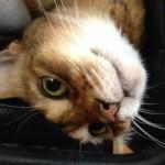 ネコの苦手なものについて思うこと(地震・雷・火事・花火?)