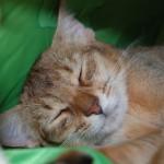 ネコの寿命について思うこと(のんびりした人生もいいもんですよ)