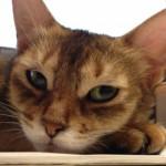 ネコの目について思うこと(わたしの目を見てフォースを感じなさい)