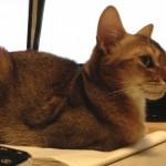ネコのヒヤリ、ハットについて思うこと(おてんばですけど、ホントはか弱い女子なんです)