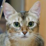 ネコの美しさについて思うこと(クレオパトラに抱っこされてた?かもしれないんです)