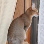 ネコの室内飼いについて思うこと(自由とは全ての責任を担うこと。う~ん含蓄)