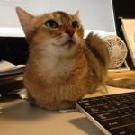 ネコの爪切について思うこと(ネールサロンには行きません)