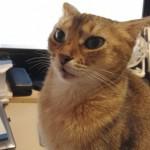 ネコとマタタビについて思うこと(酔ってるでしょ。いいえ酔ってません!)