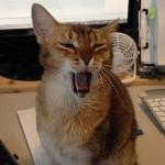 ネコと臭いについて思うこと(クサイ臭いは元から絶たなきゃダメダメ!)