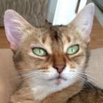 ネコの瞳について思うこと(チャマの瞳に乾杯!)