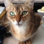 ネコの生涯について思うこと(時間は伸びるのです!チャマシュタイン)