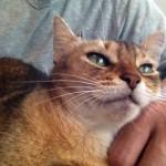ネコの活動について思うこと(なんでも聞いてください 詳しいですよ)