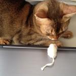 ネコとの出会いについて思うこと(チャトランの思い出)