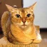 ネコの日常について思うこと(ささやかな満足が幸せなんです)