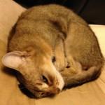 ネコの寝姿について思うこと(世の中に寝るより楽はなかりけり…)