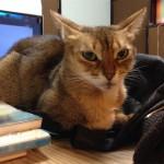 ネコの横威嚇ポーズについて思うこと(蝶のように舞い、蜂のように刺すのだ!)