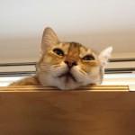 ネコの日について思うこと(ふ~ん そうなんだ)